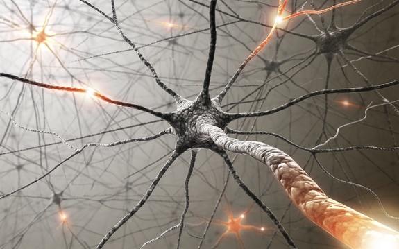 valeriana nel sistema nervoso